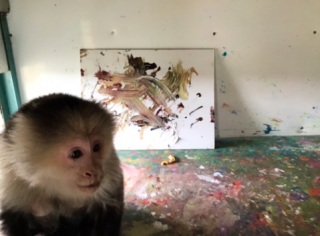 Ricky Gervais Cat Portrait By Monkey Raises Funds For Animal Charity – Bid Here